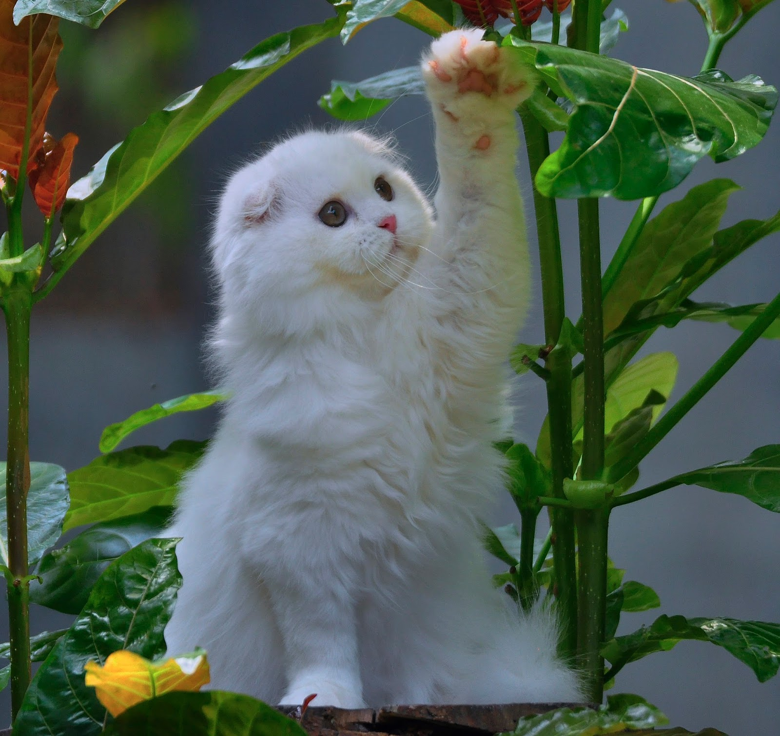 Gambar Kucing Editan Wajah Manusia godean.web.id