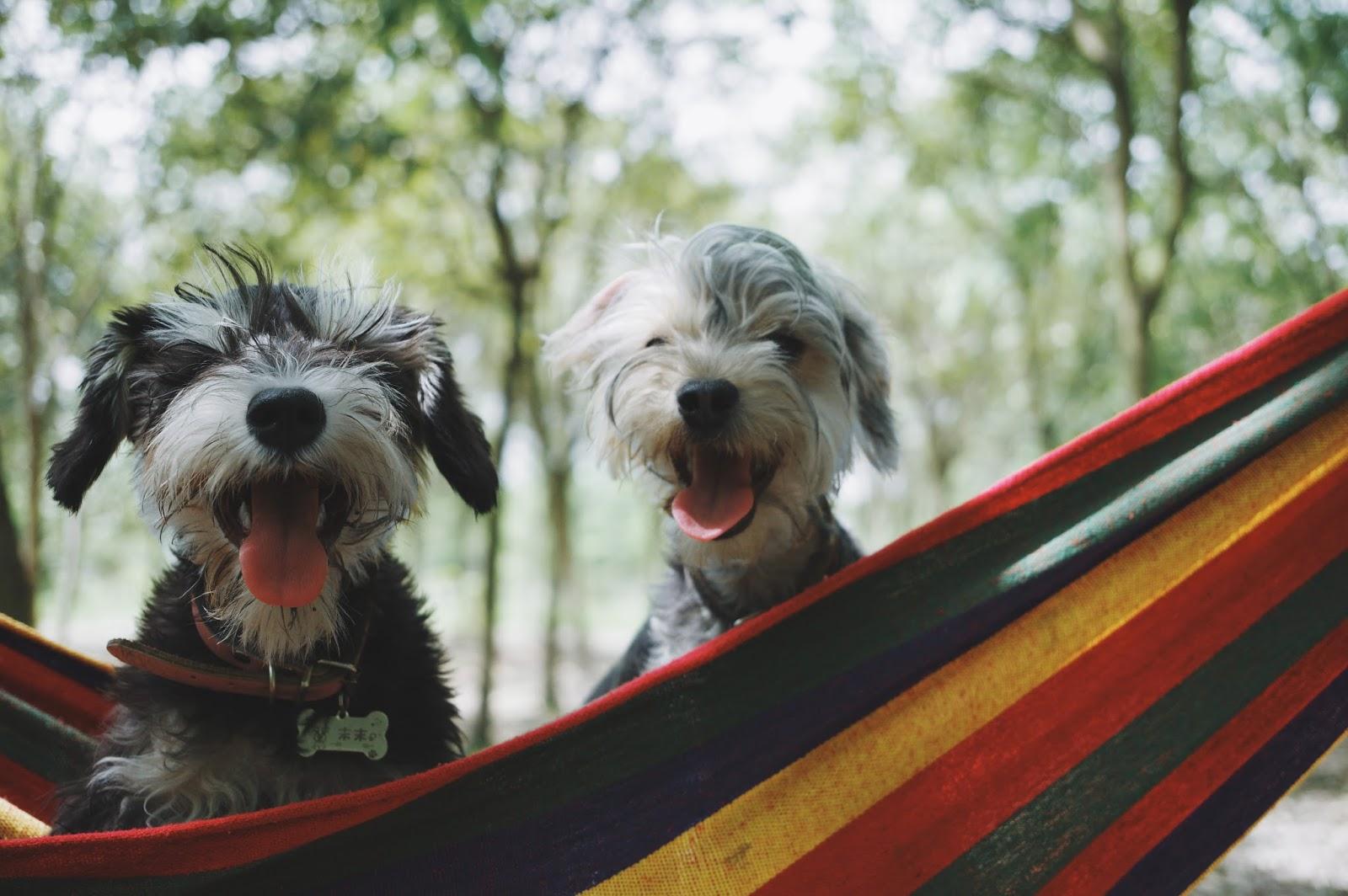 Caravanning Around Australia: Pet Friendly Caravan Parks