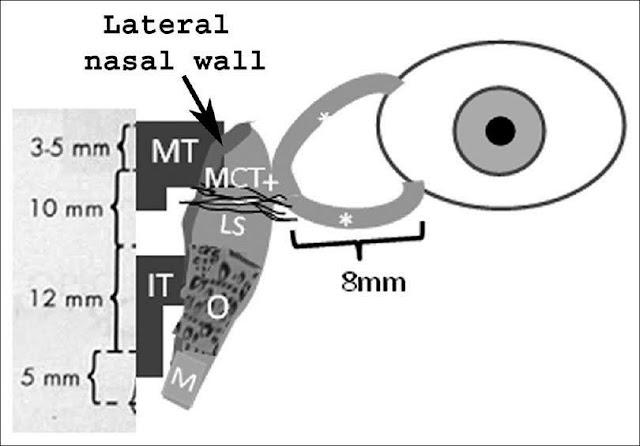 anatomy of lacrimal apparatus