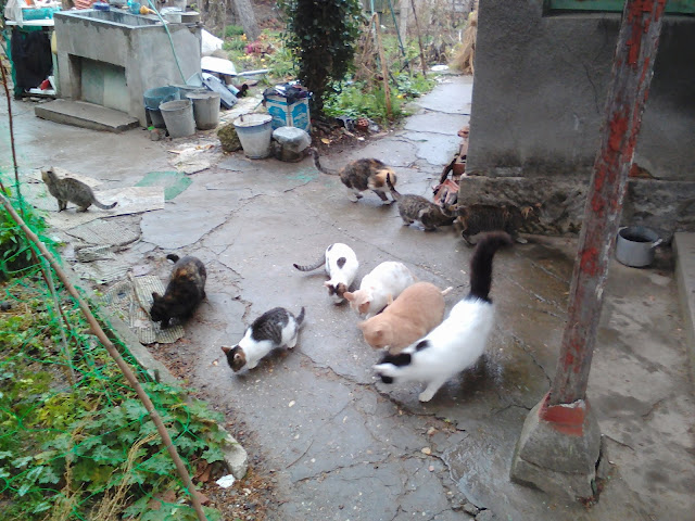 November Meeting Cats