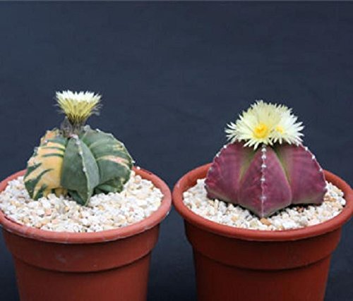 Easy Tips To Plant And Care For Ornamental Cactus Plants