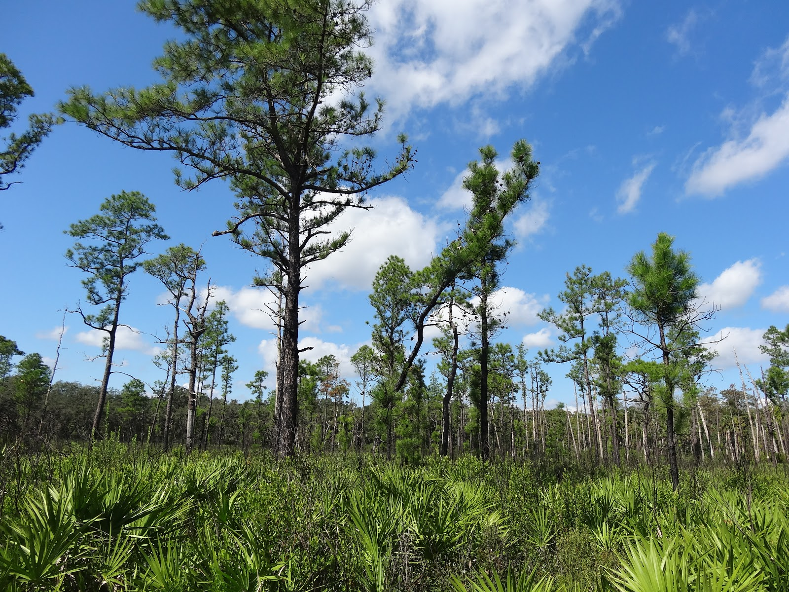 Hontoon Island State Park, Florida