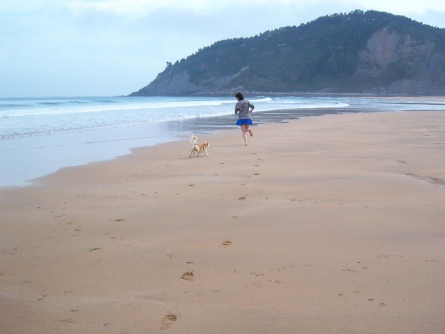 Perro ciego corriendo por la playa
