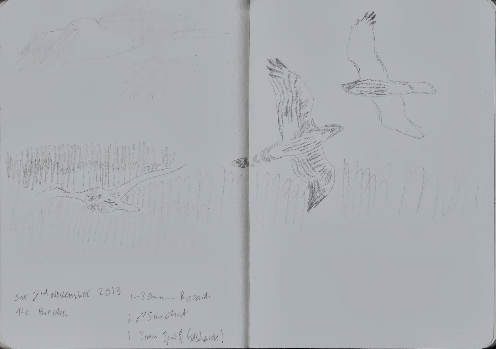 Sketches from the field: Local birding