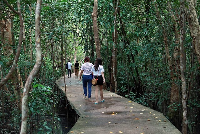 Tha Pom Klong Song Nam Nature Trail | The unseen nature trail in Krabi