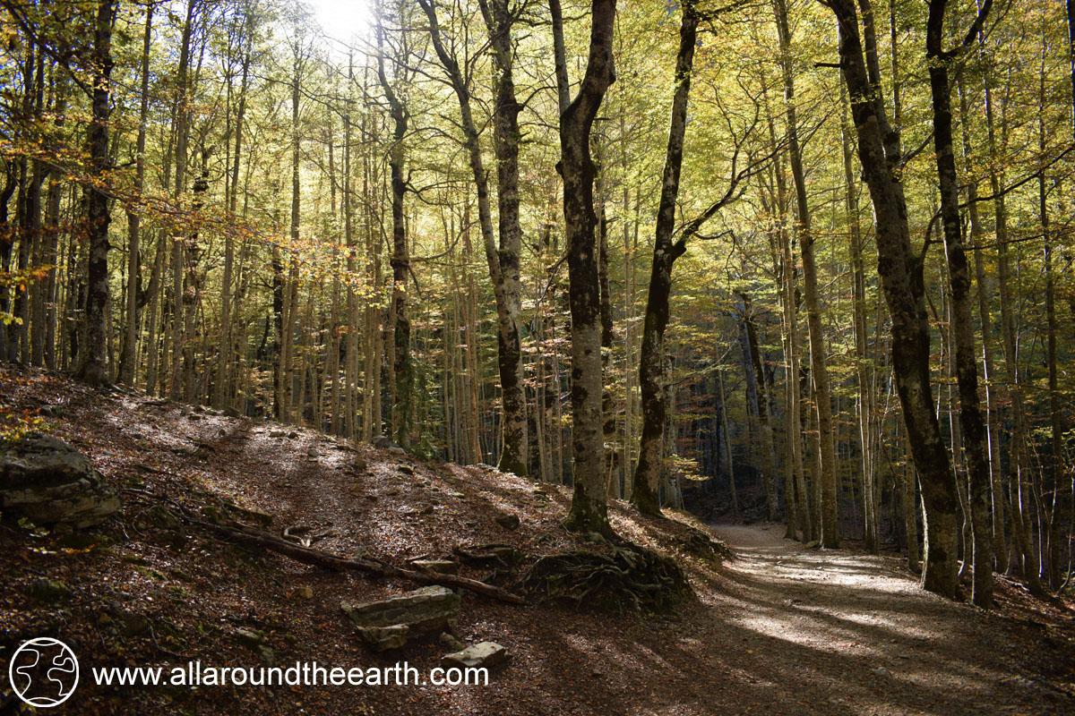 Beech forest in the Ordesa Valley, Ordesa Y Monte Perdido National Park, Spain