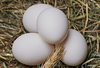 Amankah Konsumsi Telur Ayam Kampung Mentah?