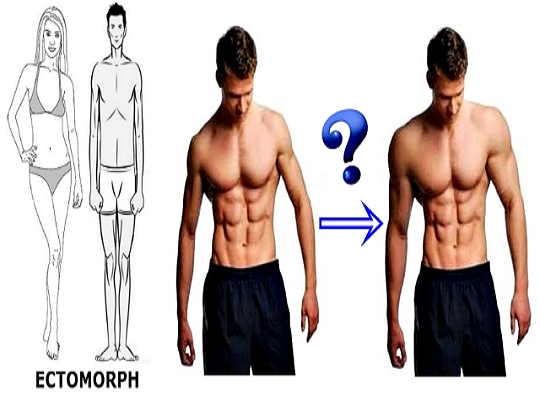 Tips How to build muscle for ectomorphs