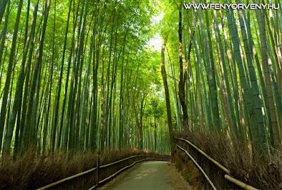 Zenélő erdők - csodálatos bambuszligetek