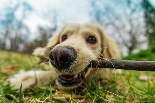 Jak dbać o zęby psa