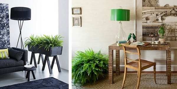 The Best Plants To Decorate Interiors 9