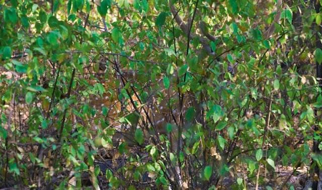 Imagen de Animal camuflado: Descubre el animal oculto entre las plantas 14