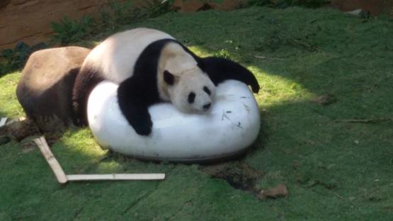 Tempat menairk di selangor Pusat Pemuliharaan Panda Gergasi