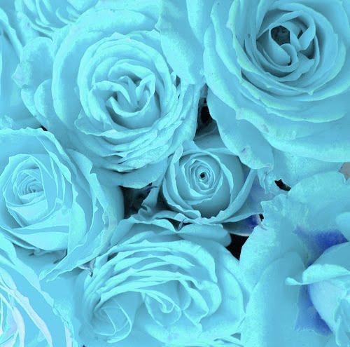 Wedding Flowers: Light Blue Roses