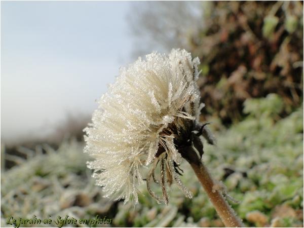 Photo Promenade matinale en hiver...