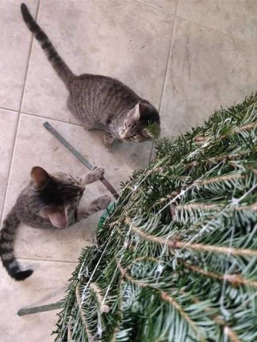 коты планируют завалить ёлку