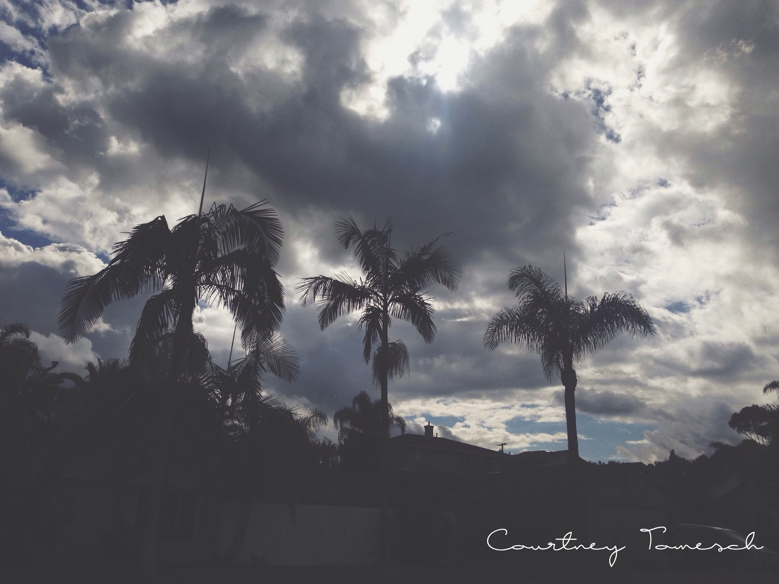Courtney Tomesch Clouds and Palm Trees