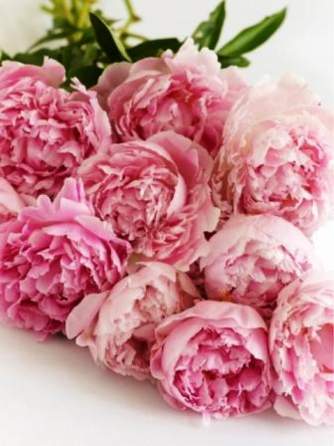 Pictures Of Flowers Peonies