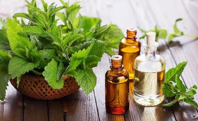 Come trattare mal di testa: olio essenziale di menta