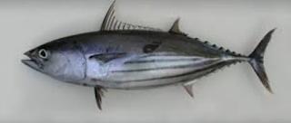 Ciri Ikan Segar