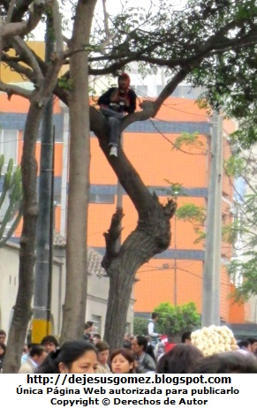Foto de peruano muy astuto sentado en el árbol para disfrutar la Parada Militar por Jesus Gómez