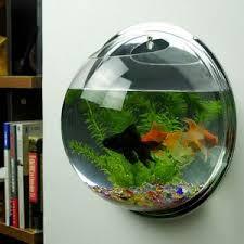 Cách nuôi cá cảnh trong bình thủy tinh nhỏ cho các bạn mới chơi cá cảnh