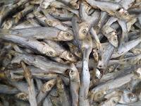 ikan asin japo