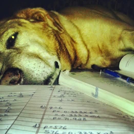 karmbhoomi: WHEN A DOG DIES !
