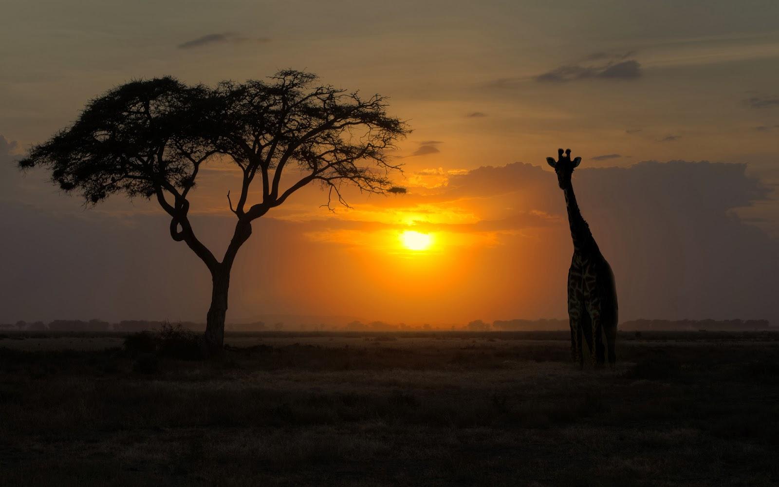 30 Stunning Full HD Wallpapers of Giraffe | Hindi