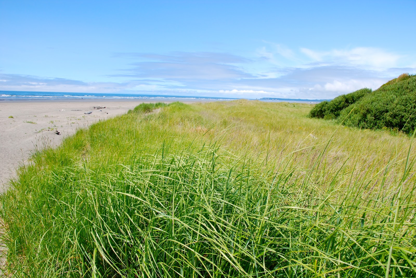 Pacific Beach State Park | Washington State Parks and ... |Pacific Beach State Park