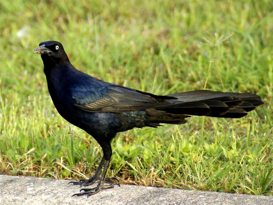 SE Texas Birding & Wildlife Watching: Let Us Now Praise ...