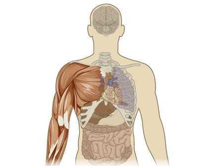 Metabolizma Çeşitleri ve Tedavi yöntemleri