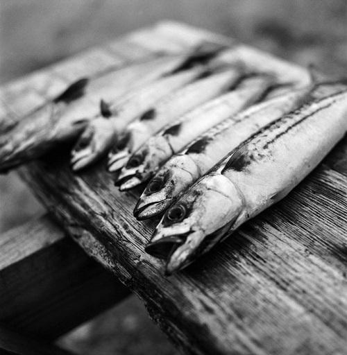 foto por Kevin Percival, proyecto documental Tanera | fotos en blanco y negro chidas | pesca