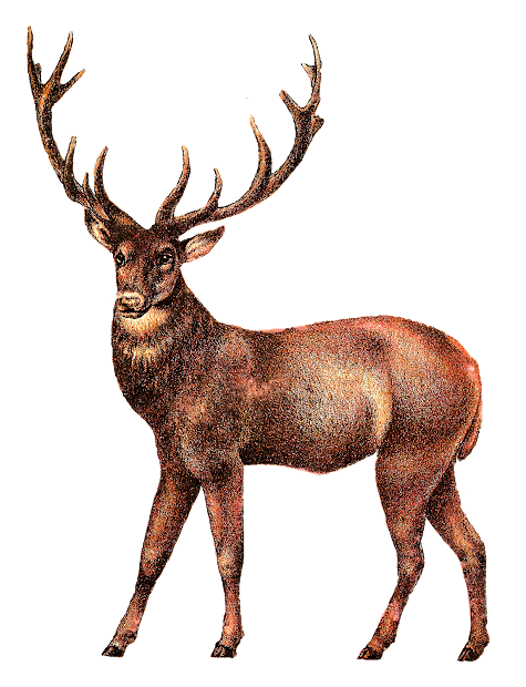 Vintage Stag Deer Clip Art