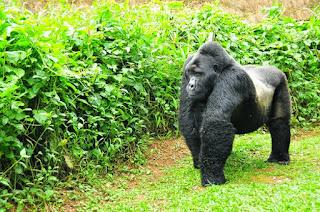 --3 Days Gorilla Safari Genocide memorial tour - Rwanda Gorilla