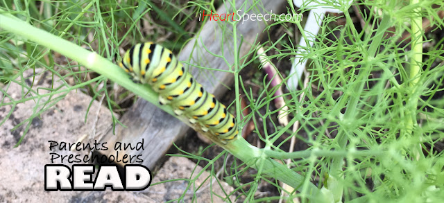 a caterpillar eating fennel