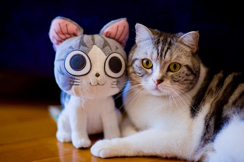 adorable animals with toy versions-6