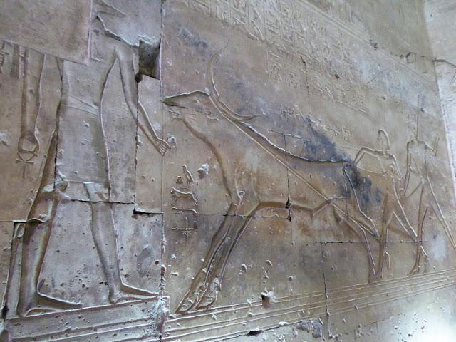 Seti e Ramses II catturano un toro