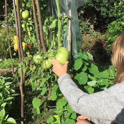 tomate verte pour fleur de sel