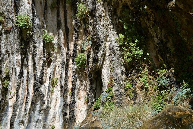 Плачущий камень. Национальный парк Зайон. Юта (Weeping Rock. Zion National Park, UT)