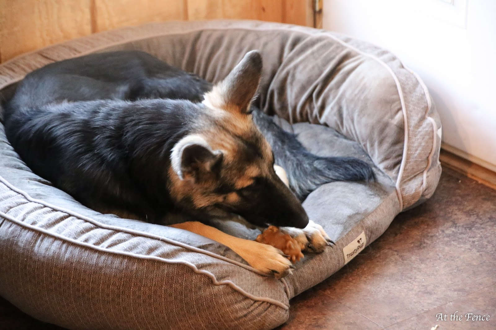 at the fence: trustypup dog bed #2016holidaygiftguide