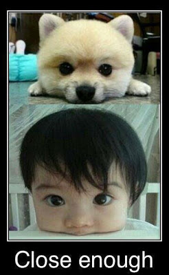 funny cute kid and puppy