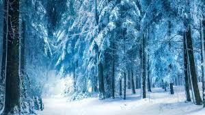 world best forest  hd wallpaper download15