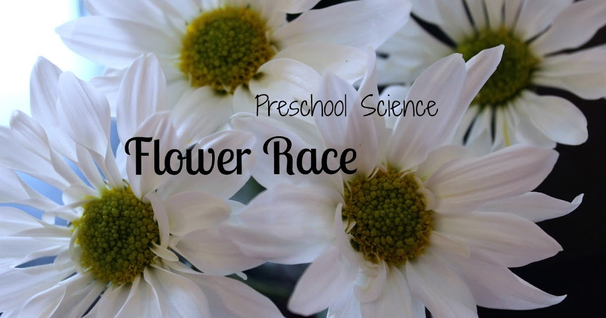 It's legal responsibility to make sure the item is delivered to you. Flower Race: Preschool Science ~ Reading Confetti