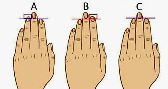 tamanho dos dedos testosterona e personalidade