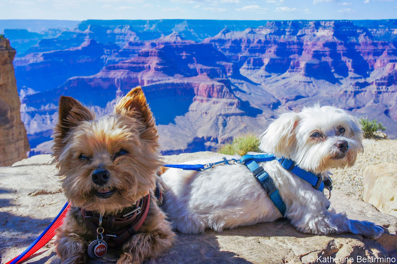 Henry and Charlie Grand Canyon Pet-Friendly Vacations Tips for Traveling with Dogs