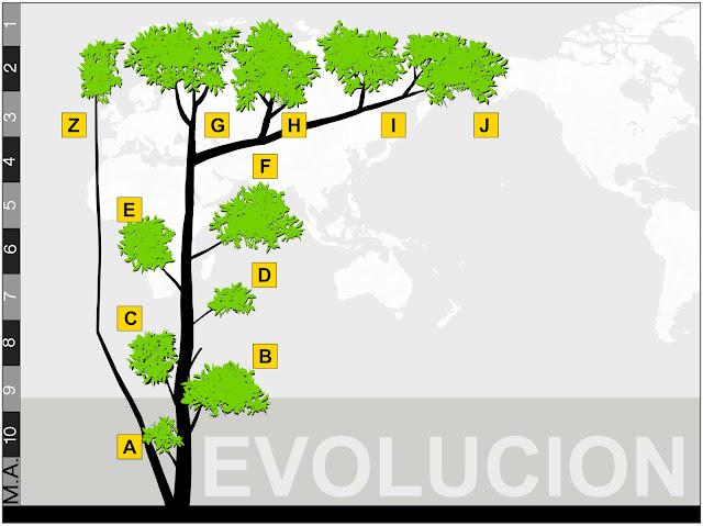estructura árbol, esquema