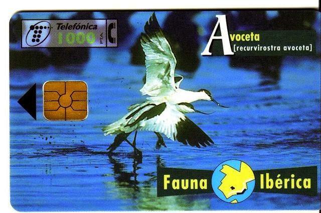 Tarjeta telefónica Avoceta (Recurvirostra avosetta)