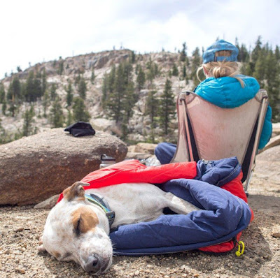 Travel Dog Bed and Sleeping Bag
