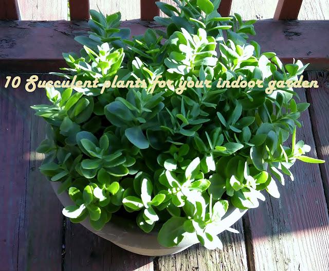 Ten succulent plants for your indoor garden